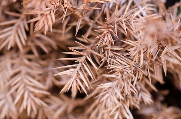 Brązowe niewyraźne suche liście to rozmyte tło wzorzyste.