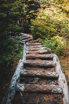 Brązowe schody betonowe między zielonymi drzewami w ciągu dnia