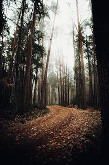 Brązowe suszone liście na ziemi otoczone drzewami