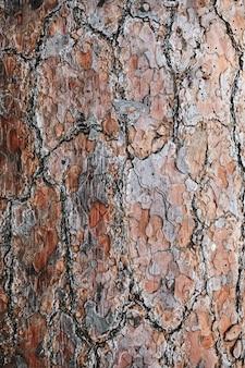 Brązowe szczegółowe drewniane teksturowane tło