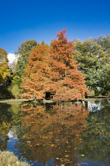 Brązowe złote drzewo w pobliżu jeziora z błękitnym niebem