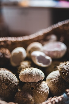 Brązowo-białe okrągłe owoce