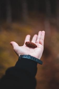 Brązowo-czarna muszla na dłoni osób