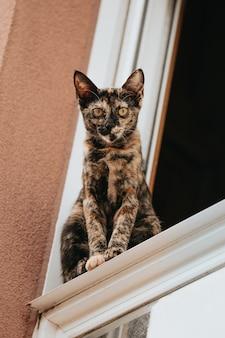 Brązowo-czarny kot patrząc prosto do kamery z okna