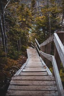Brązowy drewniany most w lesie w ciągu dnia