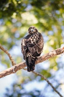 Brązowy i biały ptak na gałęzi drzewa brązowy w ciągu dnia
