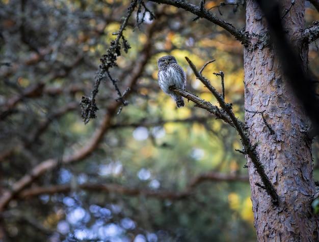 Brązowy i biały sowa na gałęzi drzewa
