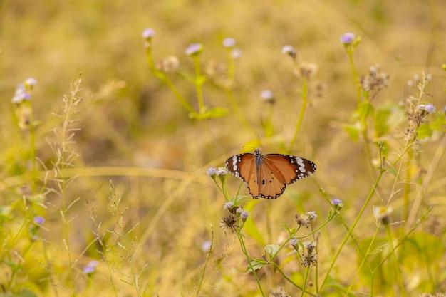 Brązowy i czarny motyl na żółtym kwiacie