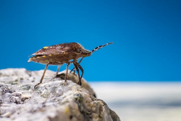 Brązowy i czarny owad na szarej skale