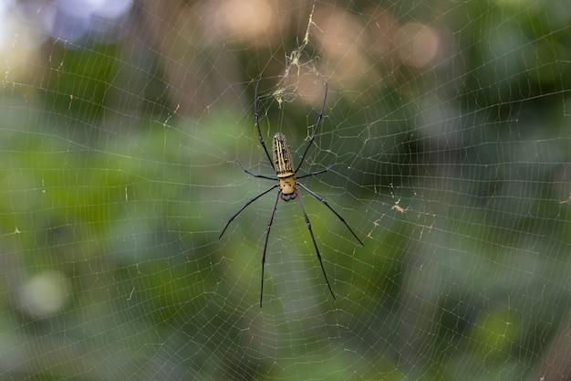 Brązowy i czarny pająk w sieci