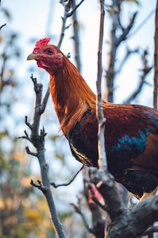 Brązowy i turkusowy kurczak na gałęzi drzewa