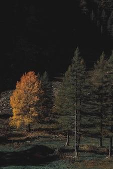 Brązowy i zielonolistny las w porze nocnej