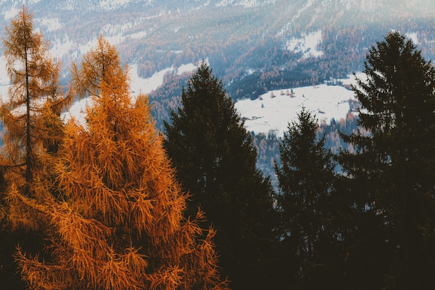 Brązowy i zielony liść drzew z ośnieżone pole w tle