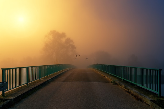 Brązowy i zielony most podczas zachodu słońca