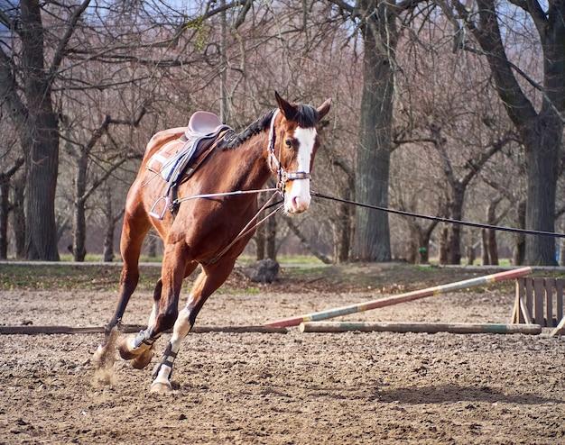 Brązowy koń biegnie na padoku.