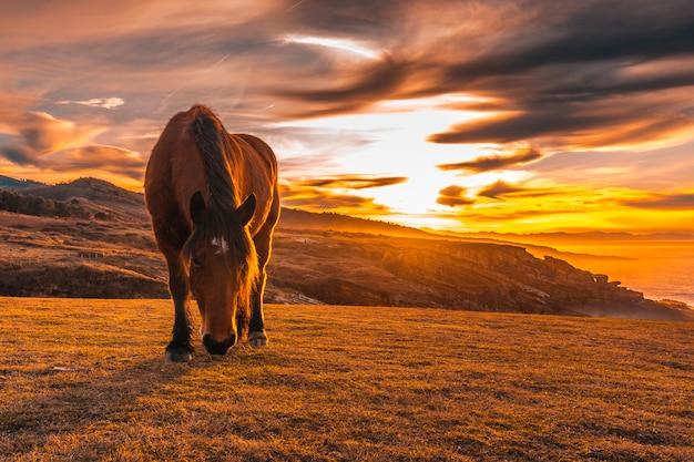 Brązowy koń jedzący o zachodzie słońca od uskrzydlonego jaizkibel z san sebastian. kraj basków