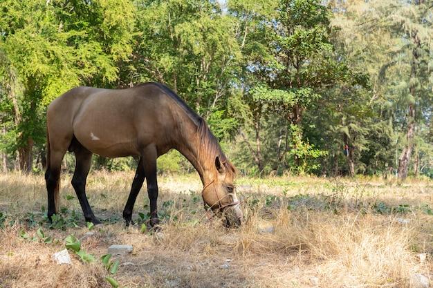 Brązowy koń jedzący trawę