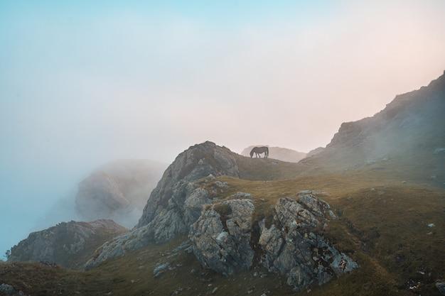 Brązowy koń pasący się na górze penas de aya w oiartzun, gipuzkoa, hiszpania
