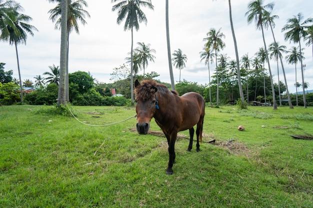 Brązowy koń pasący się na trawniku