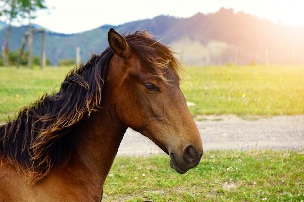 Brązowy koń portret w gospodarstwie w naturze