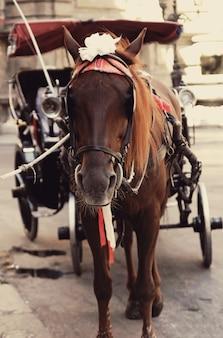 Brązowy koń w zaprzęgu na trasie turystycznej