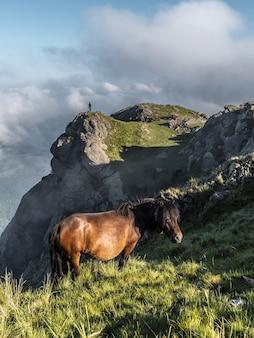 Brązowy koń wypasany na górze penas de aya w oiartzun, gipuzkoa, hiszpania