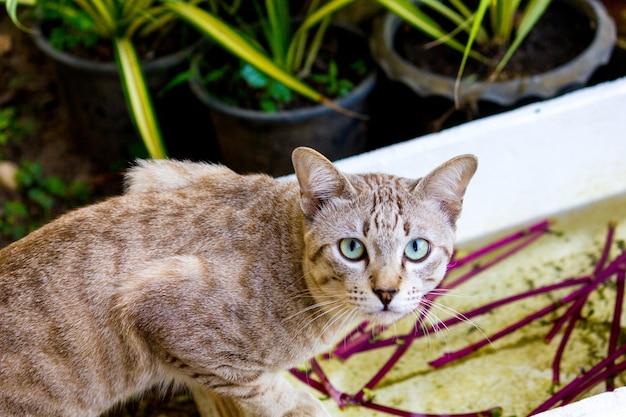 Brązowy Kot Gra Zrelaksowany Na Telefonie Komórkowym Premium Zdjęcia