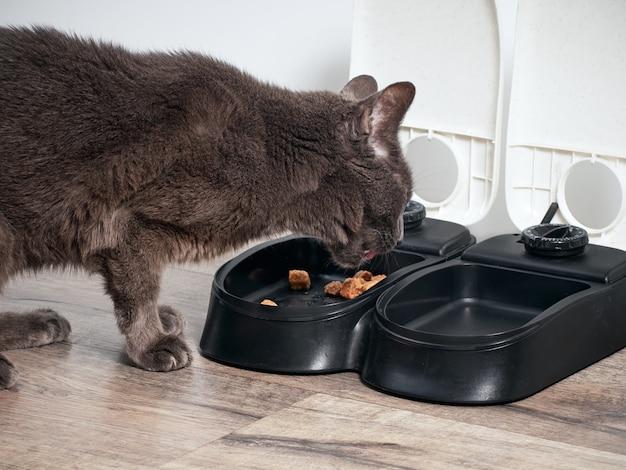 Brązowy kot je z automatycznego karmnika