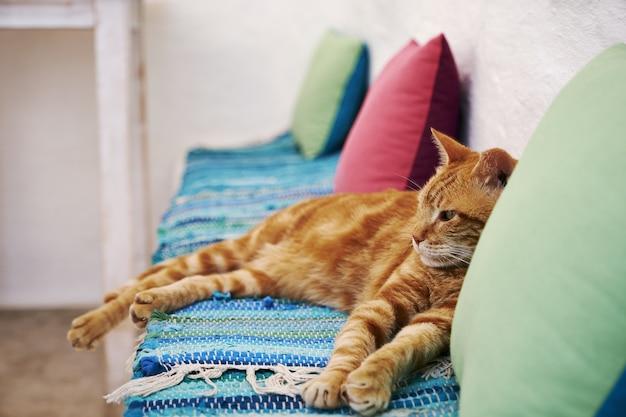 Brązowy kot siedzi na niebieskim podłożu tkaniny w aegiali, wyspa amorgos, grecja