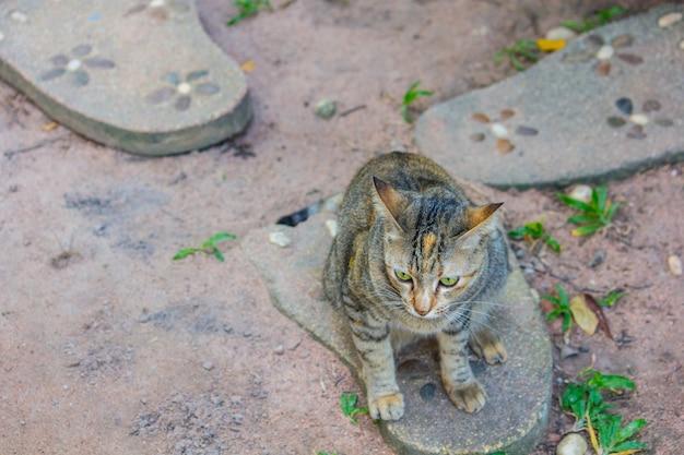Brązowy kot siedzi na wydruku stóp