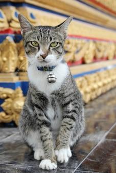 Brązowy kot stojący