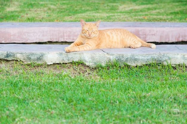 Brązowy kot w ogrodzie