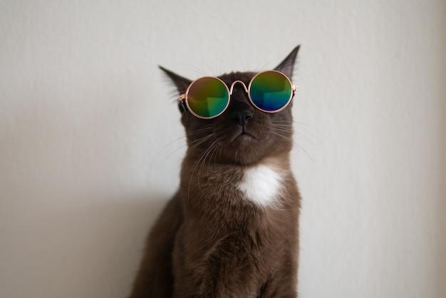 Brązowy kot z białym znakiem nosi okulary w metalicznym stylu, aby ubierać się w fantazyjny strój w zabawnym i chłodnym stylu