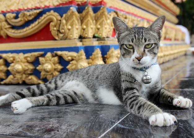 Brązowy kot