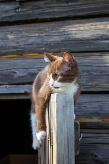 Brązowy kotek siedzi na drewnianych drzwiach drewnianego domu na ulicy. kociak o imieniu busia. kociak jest odtwarzany