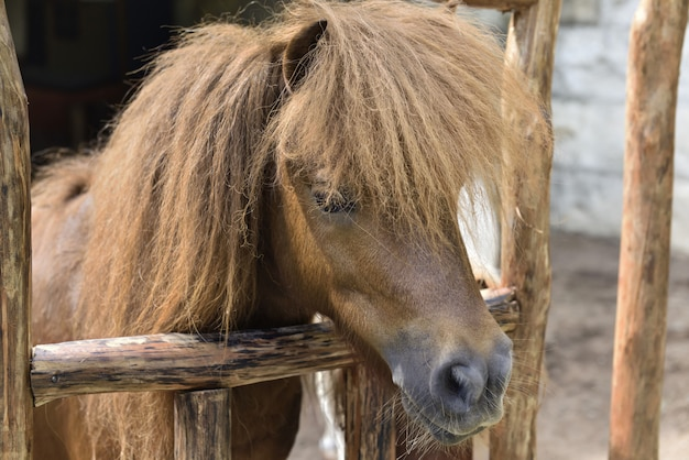 Brązowy kucyk ze śmiesznymi włosami