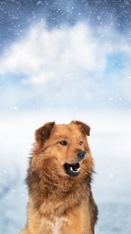 Brązowy kudłaty pies zimą na zewnątrz podczas opadów śniegu