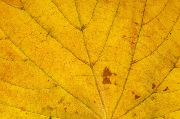 Brązowy liść z bliska. tło dla projektu