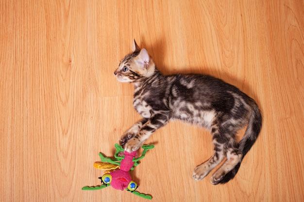 Brązowy mały kotek tygrys bengalski leopard bawić się w mieszkaniu