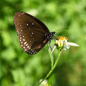Brązowy motyl na kwiatku w ogrodzie