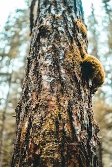 Brązowy pień drzewa