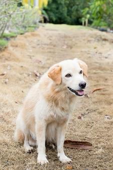 Brązowy pies hybrydowy czeka na właściciela