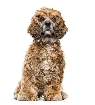 Brązowy pies mieszaniec na białej ścianie