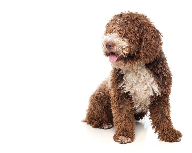 Brązowy pies siedział z wywieszonym językiem