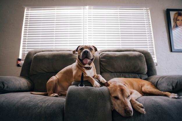 Brązowy pies w domu