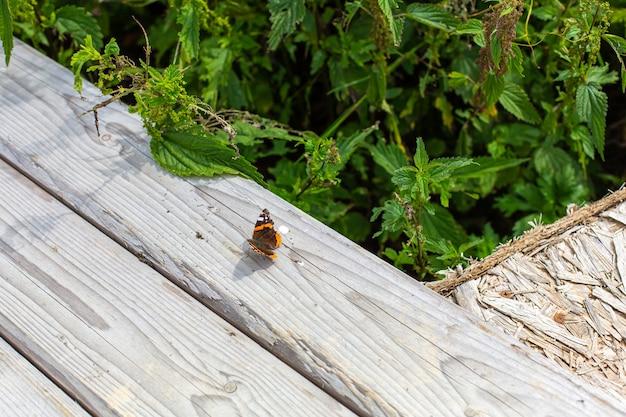 Brązowy pomarańczowy motyl siedzi na drewnianym płocie obok zielonych drzew.