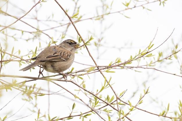 Brązowy ptak na gałęzi drzewa w ciągu dnia