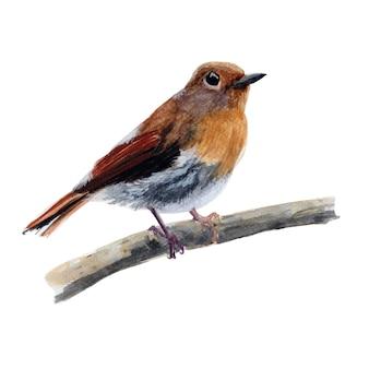 Brązowy ptak rysowane ręcznie