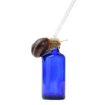 Brązowy ślimak siedzi na niebieskiej szklanej przezroczystej butelce z pipetą, produkt na białym tle. kosmetyki naturalne