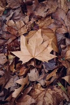 Brązowy suchy liść na ziemi w sezonie zimowym
